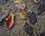 Fallen leaves in aut